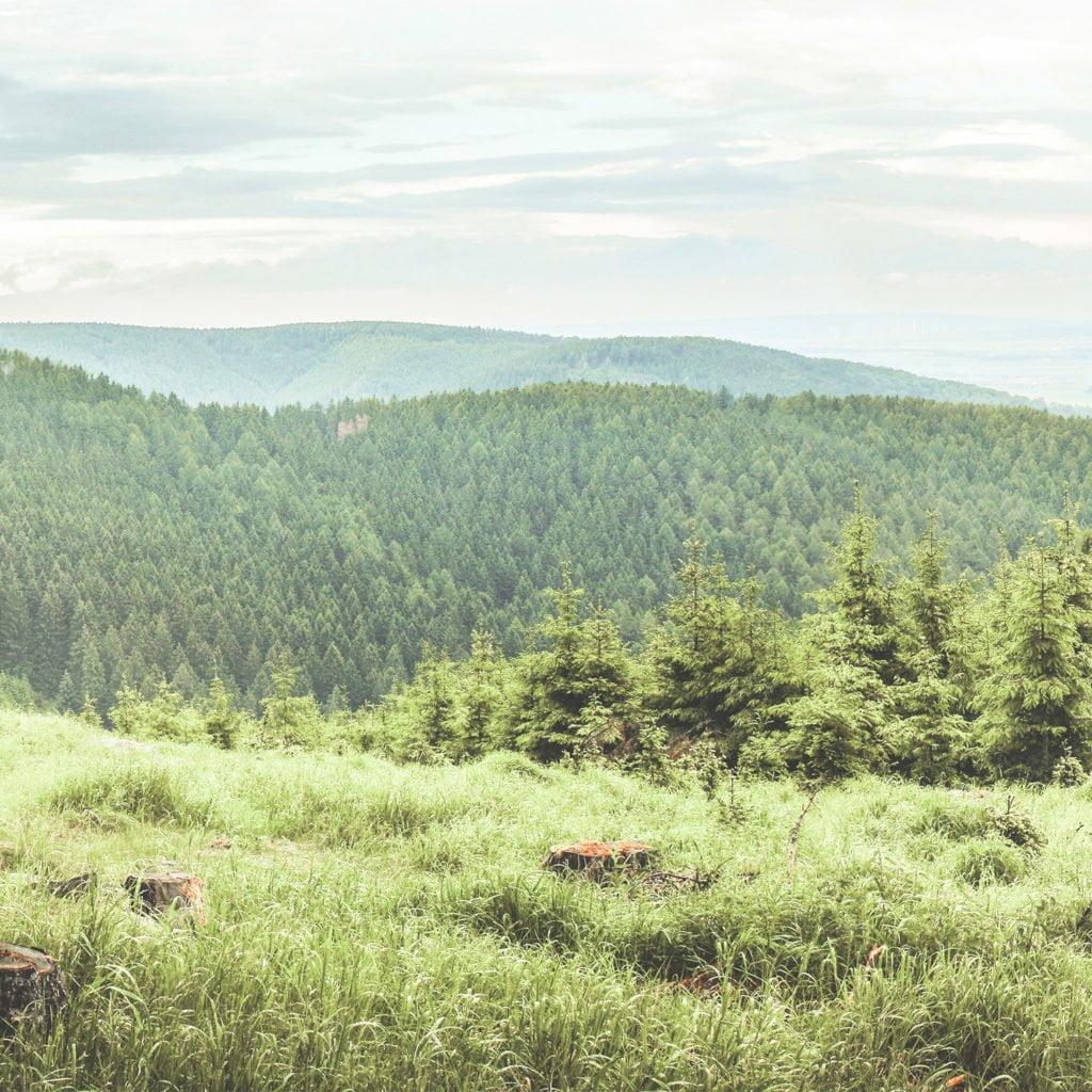 skogsbruksplan skogspartner