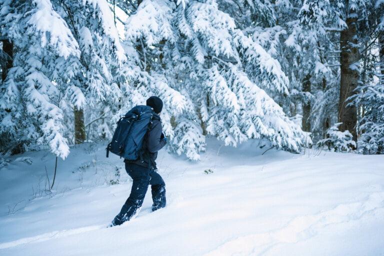Vandrig i vintrig skog