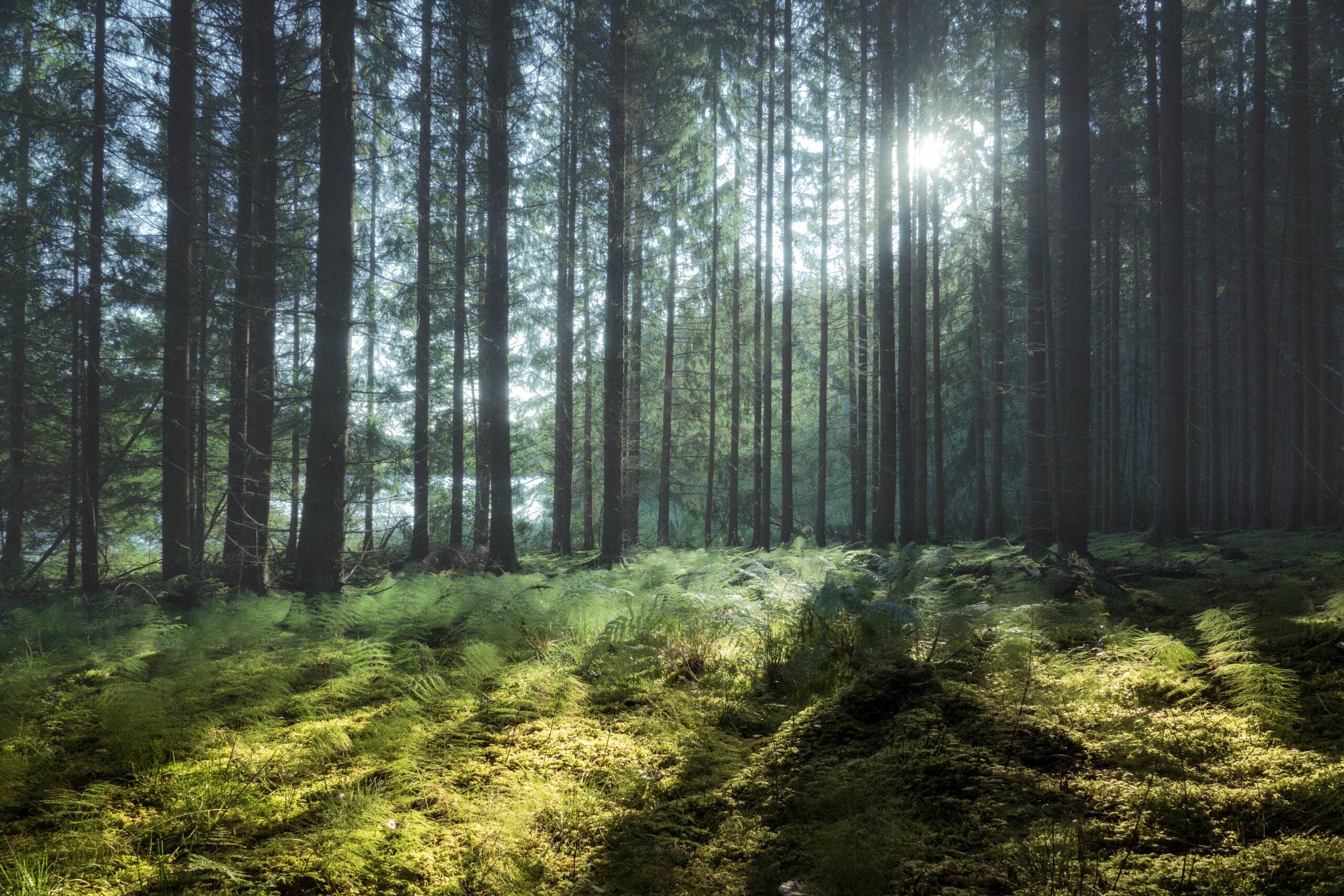 Praktik hos Skogspartner
